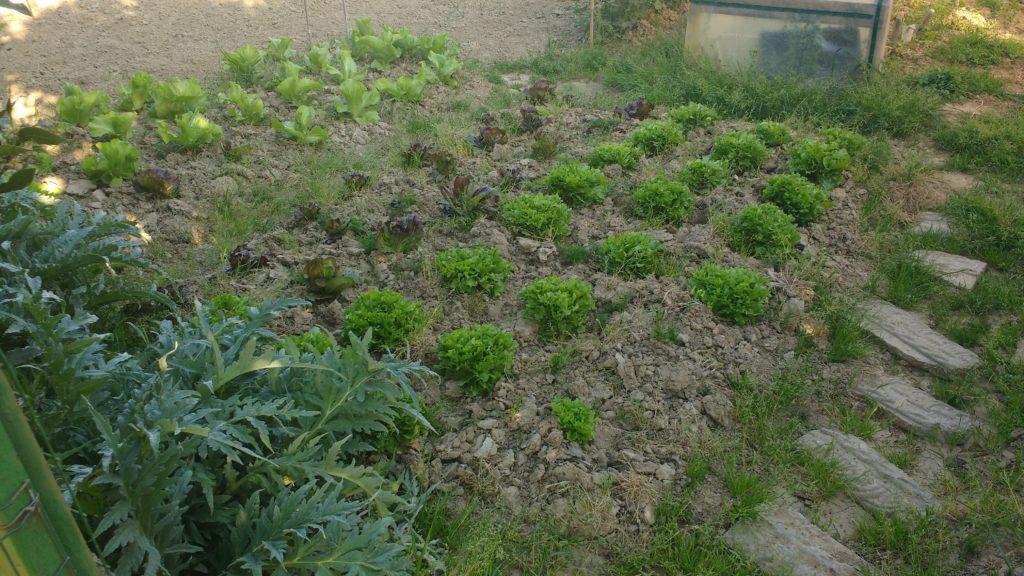 Il mio orto